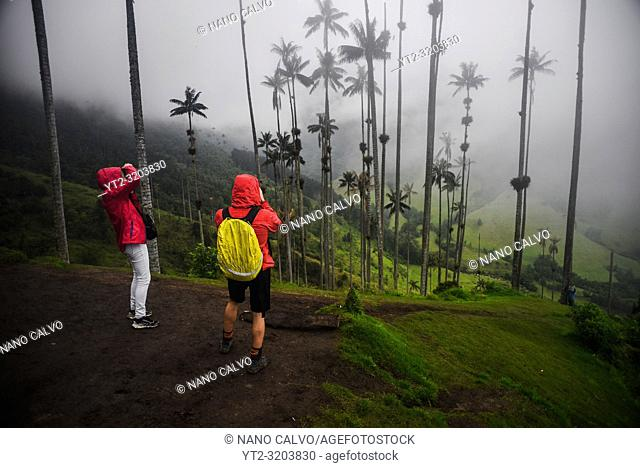 The Cocora Valley (Spanish: Valle de Cocora) is a valley in the department of QuindÃo, just outside the pretty little town of Salento