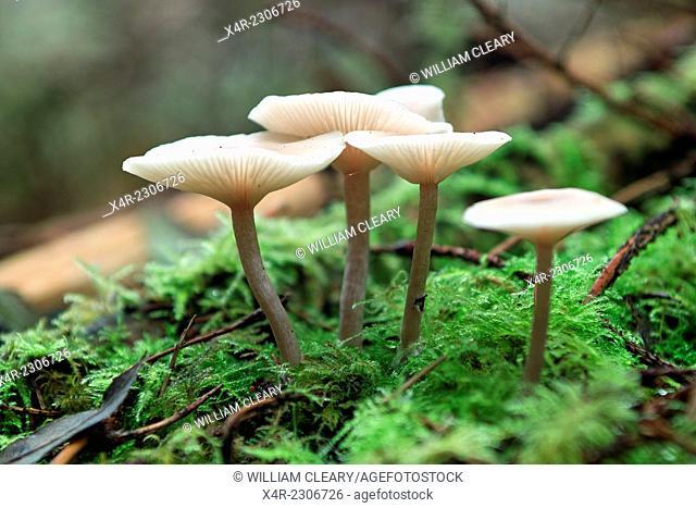 Fungus, Newcastle wood, Ballymahon, County Longford, Ireland