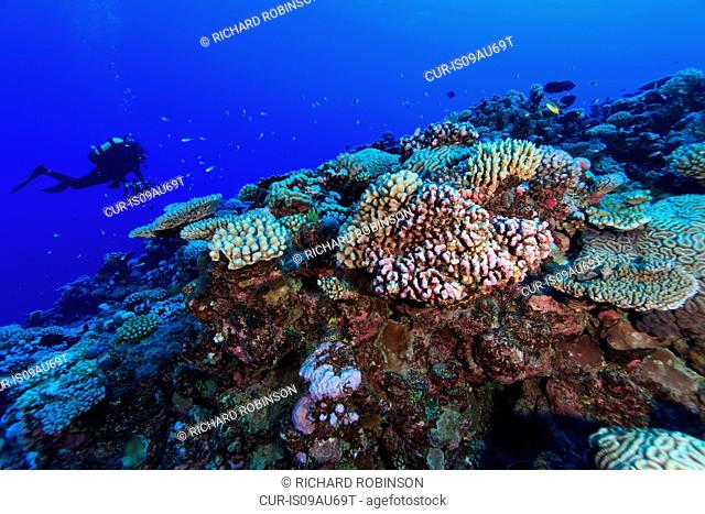 Underwater view of scuba diver photographing coral reef at Palmerston Atoll, Cook Islands