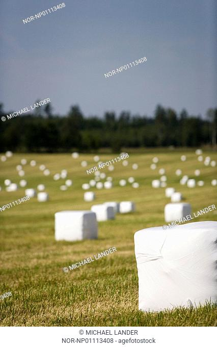 Wrapped hay bales in a field, Katrineholm, Sweden
