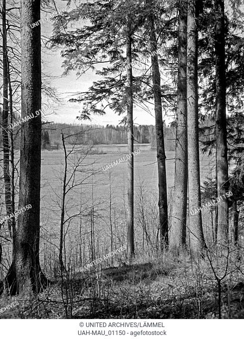 Im Wald am Marschner See in Masuren, Ostpreußen, 1930er Jahre. In the forest near Lake Marschner See in Masuria, East Prussia, 1930s