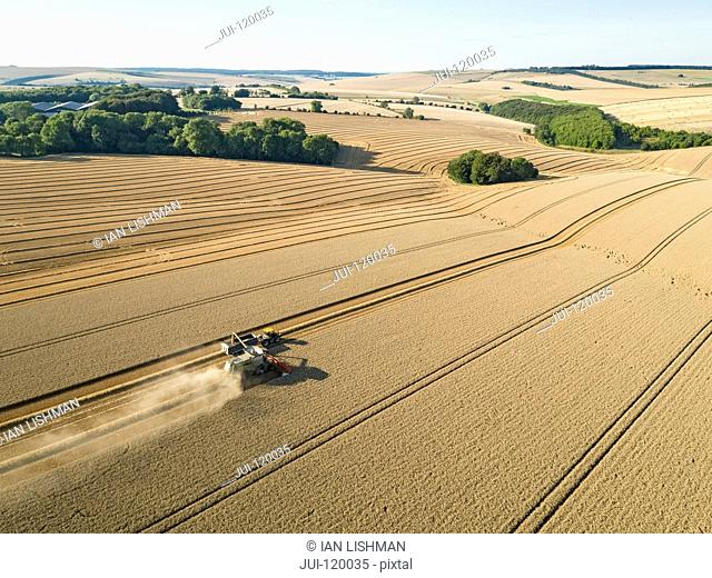 Harvest aerial farm landscape of combine harvester cutting summer wheat field crop with tractor trailer