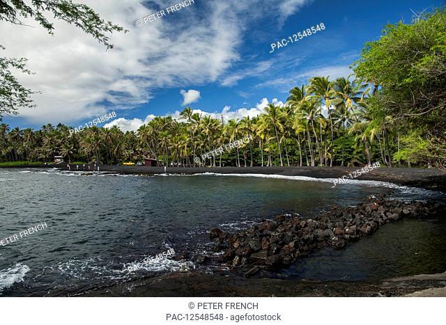 PunaluÊ»u Beach, a black sand beach lined with palm trees along the water's edge, District of Kau; Island of Hawaii, Hawaii, United States of America
