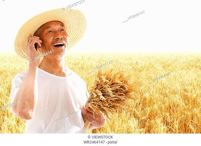 Farmer harvesting in field