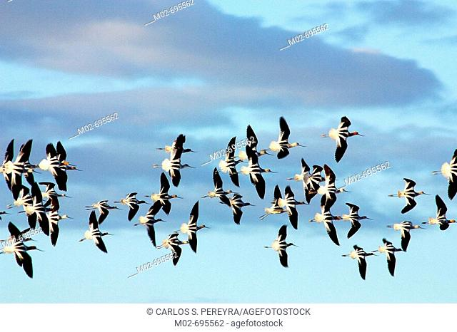 Birds flying in Baja California Sur, Mexico