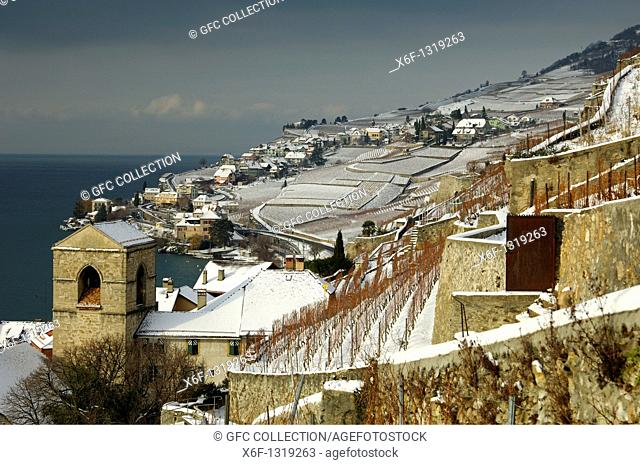 Snow-covered vineyards along Lake Geneva, Lac Leman, in the UNESCO World Heritage site Lavaux between the municipalities of Saint-Saphorin and Rivaz