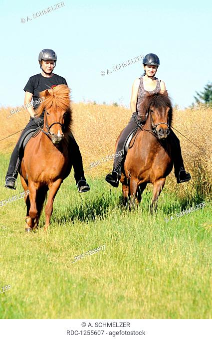 Hacking with Icelandic Horses