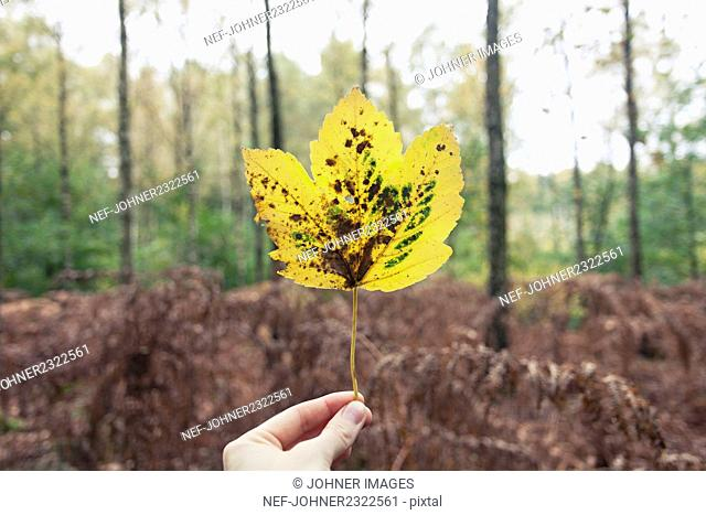 Hand holding yellow leaf in forest