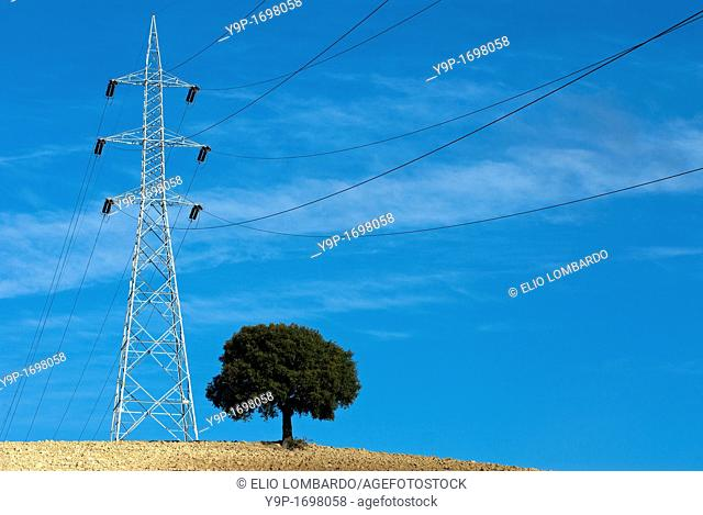 Electricity pylon and tree in cultivated field  Umbria  Italy
