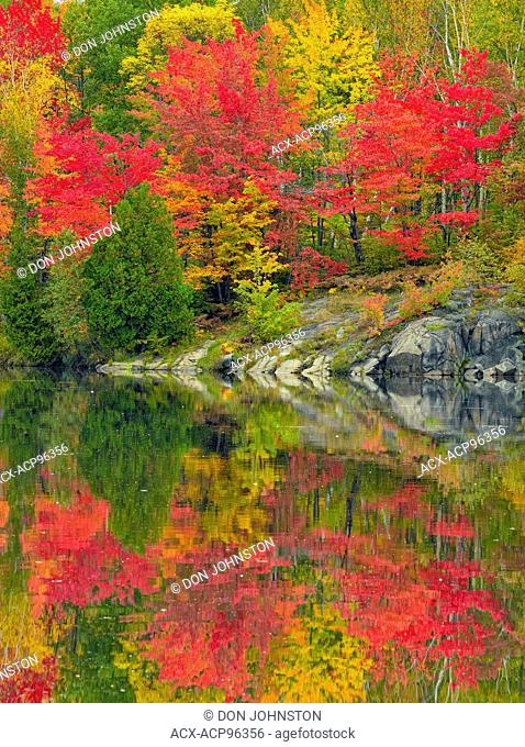 Autumn foliage in a mixed hardwood forest reflected in Simon Lake, Greater Sudbury, Ontario, Canada