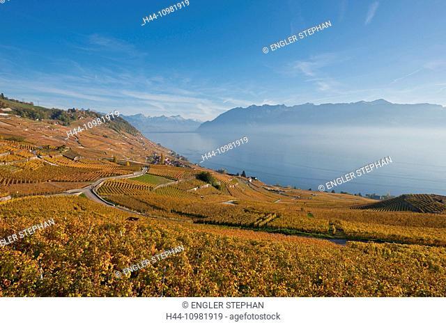 Lavaux, wine region at the lake Geneva in autumn