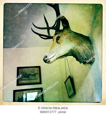 Head of a deer stuffed. North Yorkshire. Yorkshire Dales, England, UK. Europe