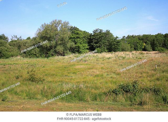 View of valley fen reserve habitat, Market Weston Fen, Market Weston, Little Ouse Valley, Suffolk, England, june