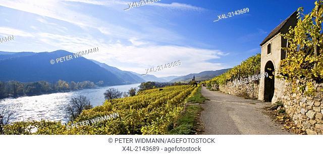 vine, Austria, Lower Austria, Wachau, Weissenkirchen