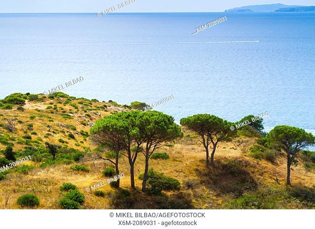 Punta Falconera. Roses. Costa Brava, Gerona. Catalonia, Spain, Europe