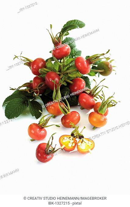 Rose hips of the dog rose (Rosa canina), a cut