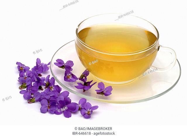 Sweet Violet or Common Violet (Viola odorata), herbal tea, medicinal tea