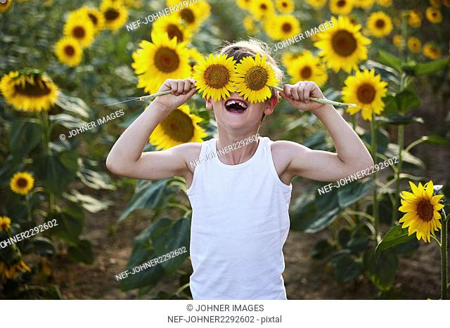 A child in a sunflower field