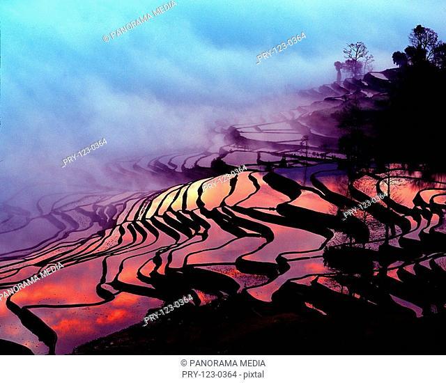 terraces,Yuanyang,Yunnan Province,China