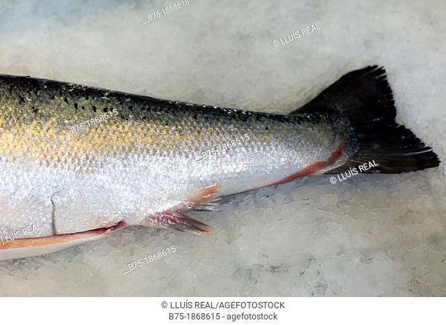 fresh salmon tale, digital composition