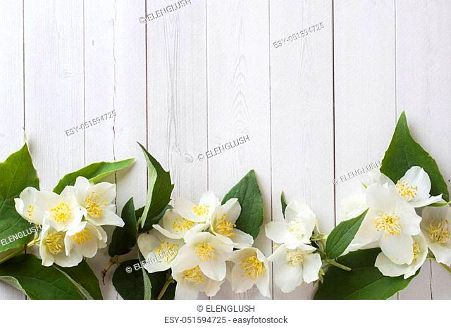 Jasmine flowers on a light background. Flower frame. Copy space for text