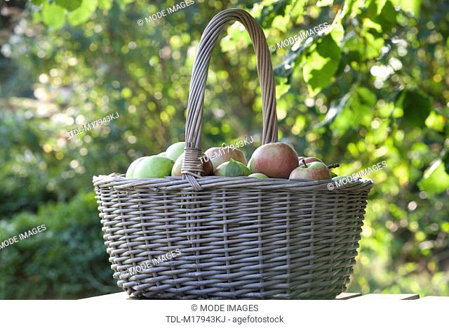 A basket of apples on a garden table