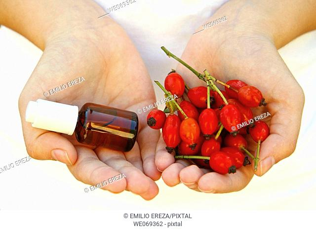 Rosehips (Rosa canina) and body oil