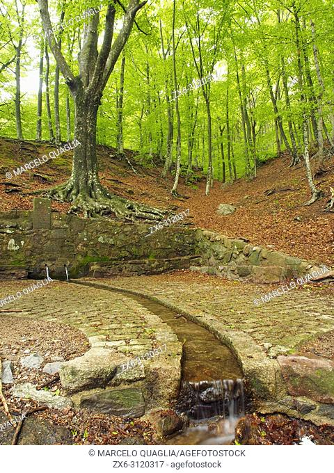 Font Bona Fountain site and beech forest (Fagus sylvatica), Sant Marçal area. Springtime at Montseny Natural Park. Barcelona province, Catalonia, Spain