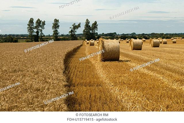 Harvesting, West Sussex