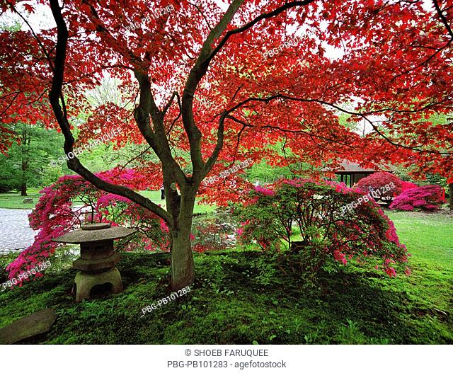 Tree containing red leaves Netherlands
