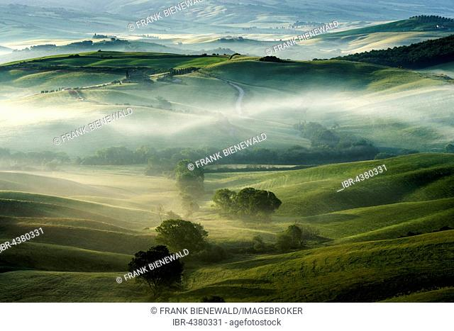 Typical green Tuscan landscape in Val d'Orcia, fields, trees and morning fog at sunrise, San Quirico d'Orcia, Tuscany, Italy