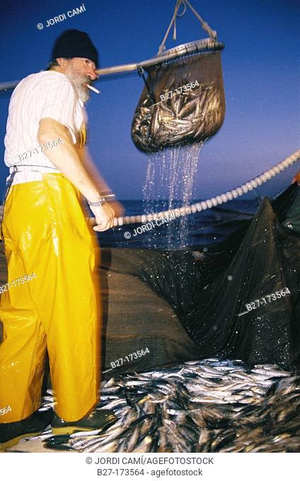 Sardine fishing in León gulf. Mediterranean sea