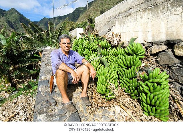 Local man farmer harvesting bananas in banana plantation at Hermigua on island of La Gomera, Canary Islands