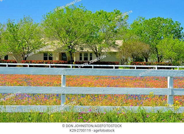 White fence and spring wildflowers, Hwy 97 near Stockdale, Texas, USA