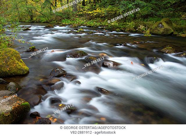 Oak Grove Fork Clackamas River at Ripplebrook Campground, West Cascades Scenic Byway, Mt Hood National Forest, Oregon