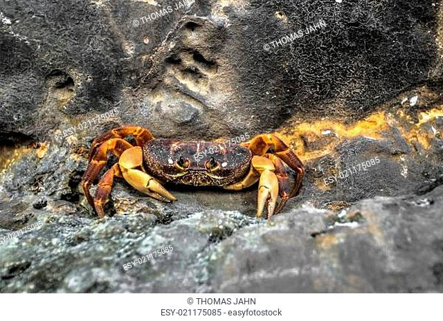 Grap on Thailand Beach Temple Rocks Krabi