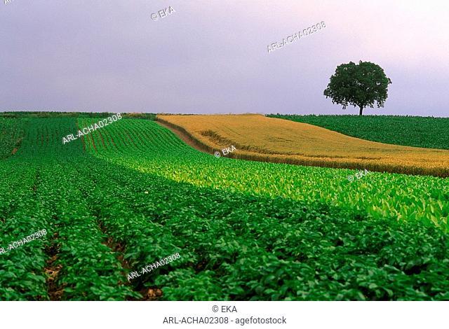 countryside,Belgium