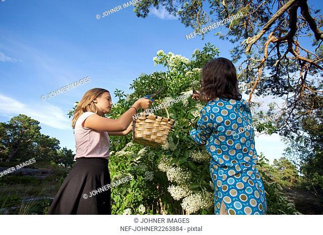 Mother and daughter picking elderflowers