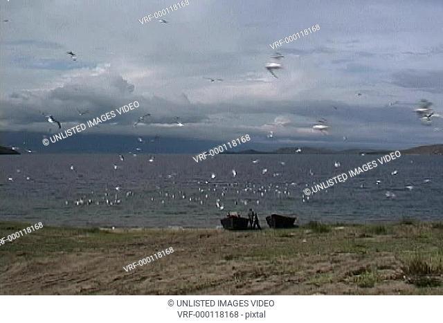 Boats & birds Baikal