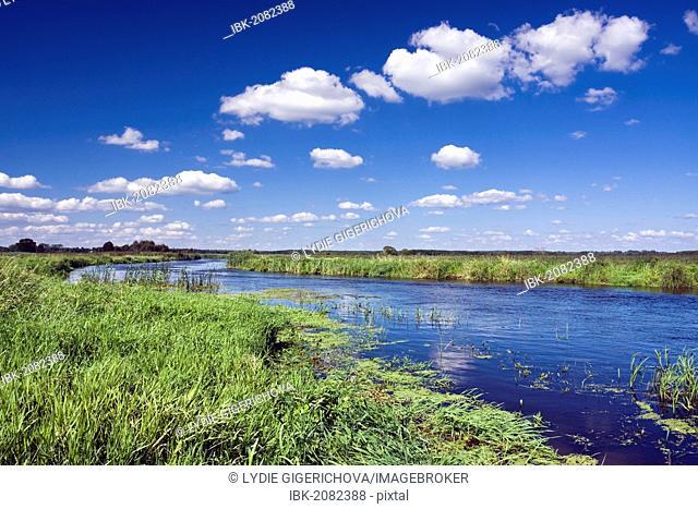 Narew River near Bokiny village, Narwianski National Park, Poland, Europe
