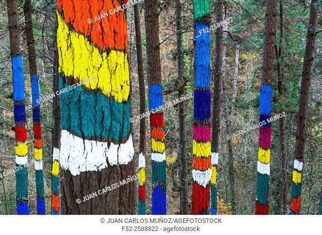 Painted forest, Oma Valley, Urdaibai, Bizkaia, Basque Country, Spain