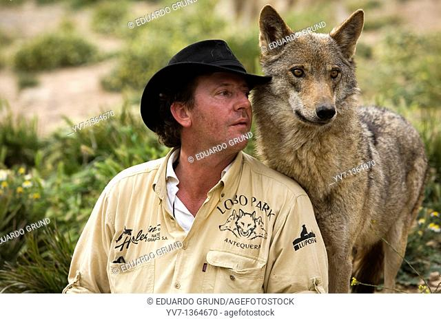 Daniel Weigend, playing and getting pampered by one of his acceptance with European wolves, specifically a female, Wolf park, Antequera, Malaga, Andalusia