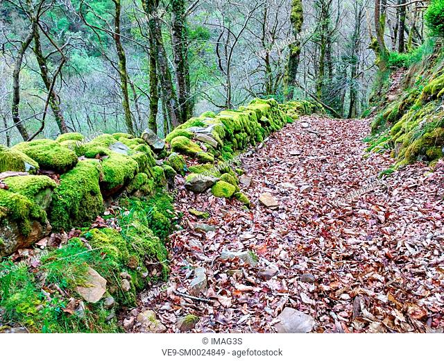 Path near San Adriano del Monte abandoned village, Grado municipality, Asturias, Spain
