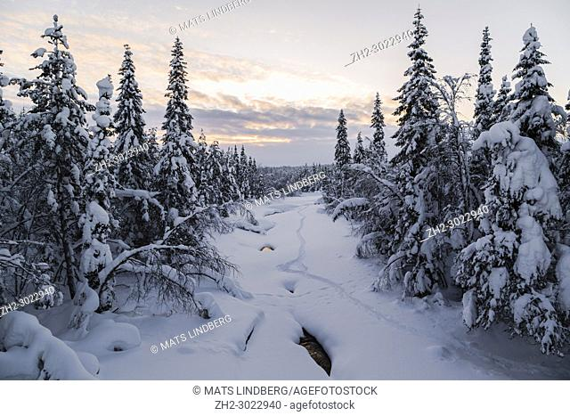 Frozen creek covered with snow, snowy trees and plenty of snow, Gällivare county, Swedish Lapland, Sweden
