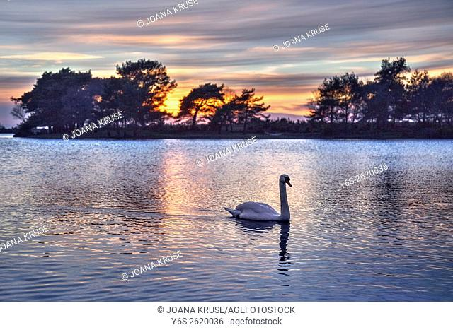 sunset in the New Forest at Hatchet Pond, Beaulieu, Hampshire, England, UK