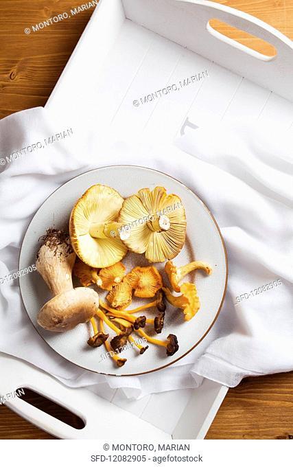 Various fresh mushrooms on plate