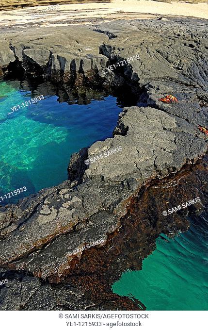 Pool of transparent waters and volcanic rocks with Sally Lightfoot Crabs Grapsus grapsus at Punta Vincente Roca, Isabella Island, Galapagos archipelago, Ecuador