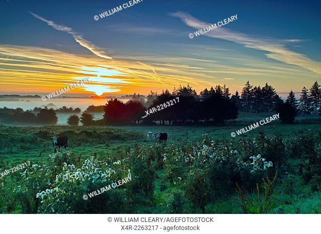 Sunrise at Loughnavalley, County Westmeath, Ireland