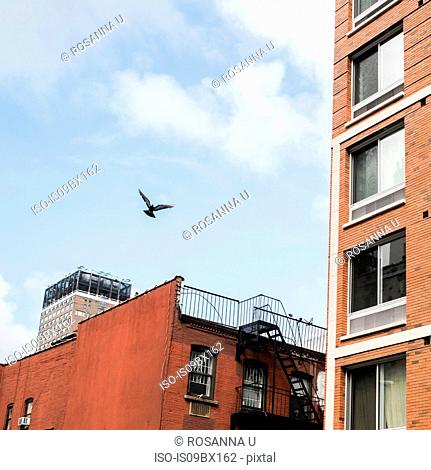 Bird in flight by buildings, Brooklyn, New York, US