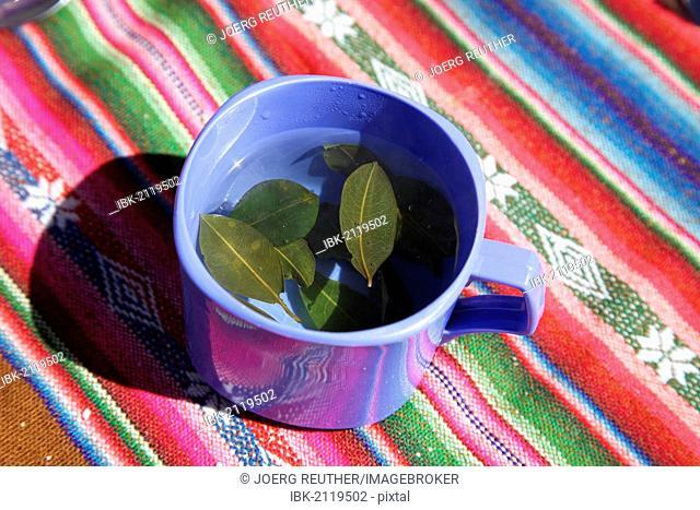 Tea for altitude sickness made from coca leaves, Altiplano, Bolivia, South America
